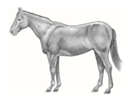 Horse in moderately thin condition