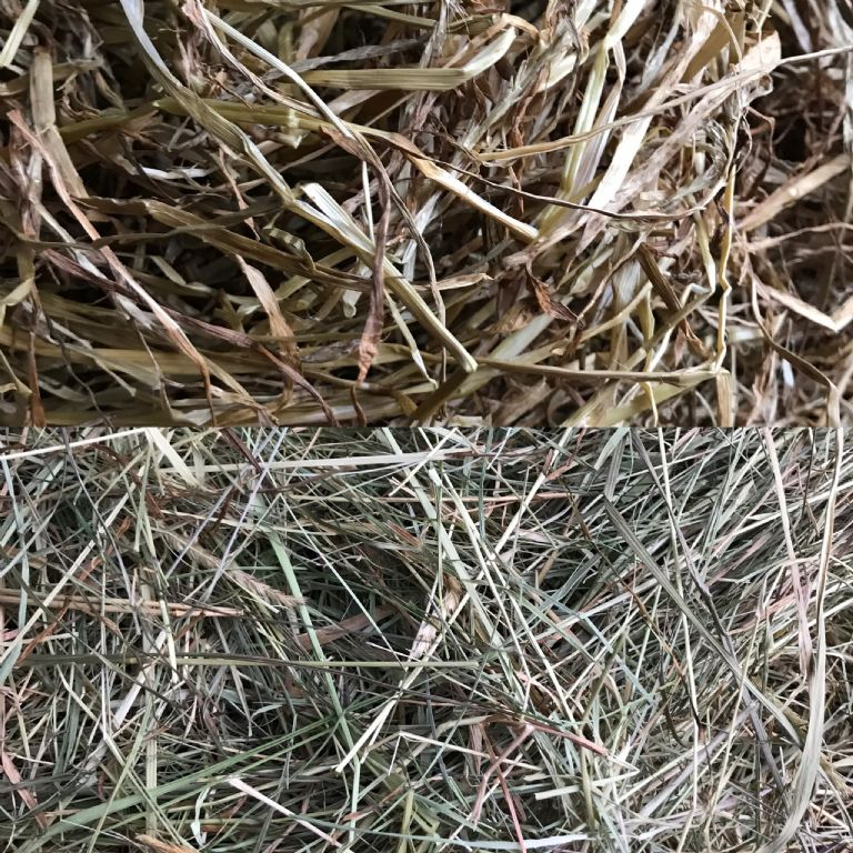 Hay v's Haylage – Which Forage Should You Choose?