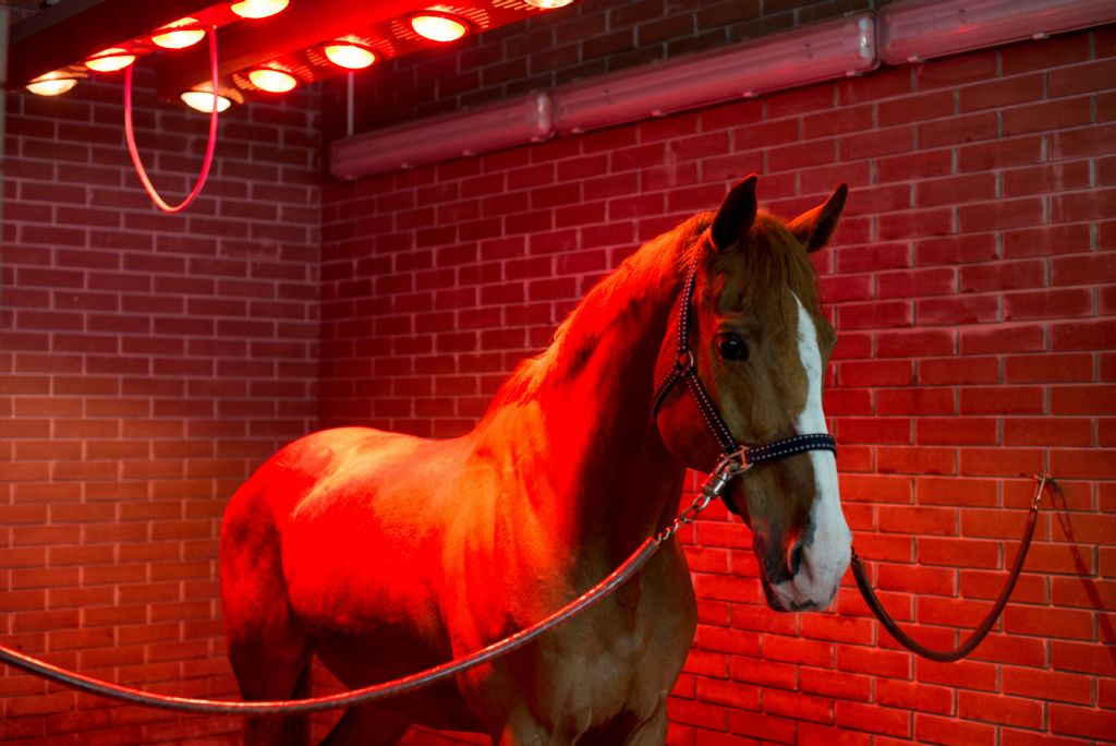 Does What we Feed Affect our Horses Coat?