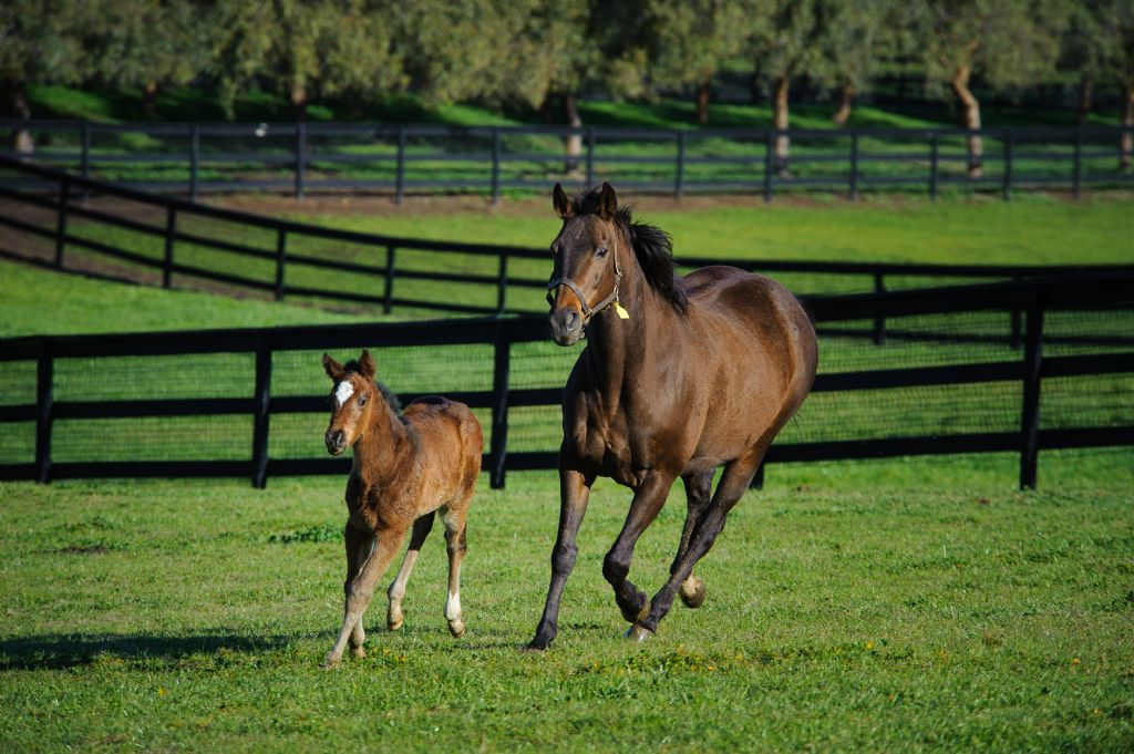 Getting it right - Nutrition and the Neonatal Foal