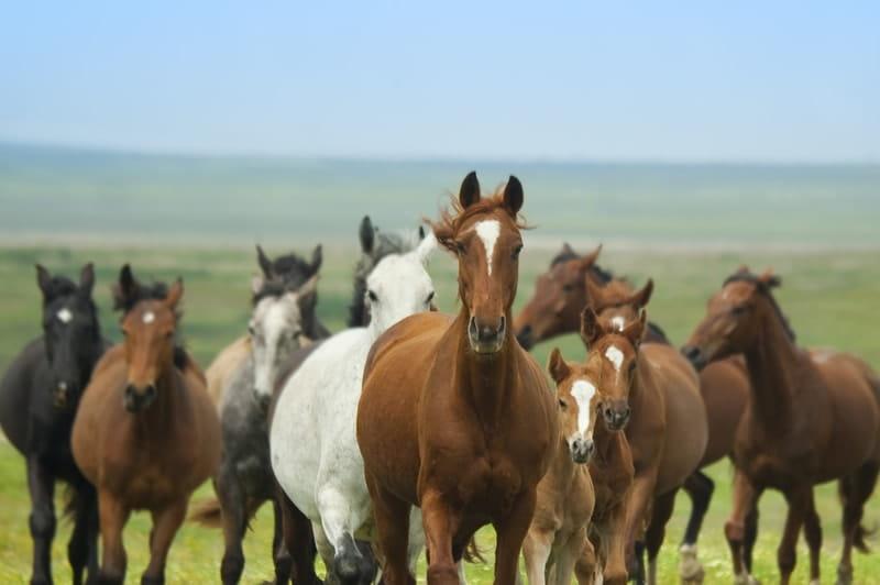 Bluegrass Horse Feeds - Feeding Cheltenham's Irish Champions