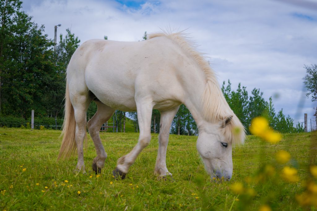 Feeding Management for Equine Cushing's Disease