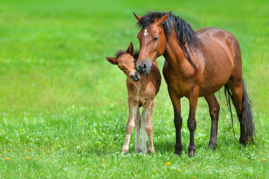 Getting it right: Weaning