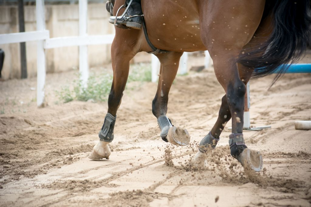 Can Poor Nutrition Affect Hoof Quality?
